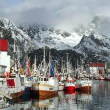 Henningsvær havn - lofotfiske